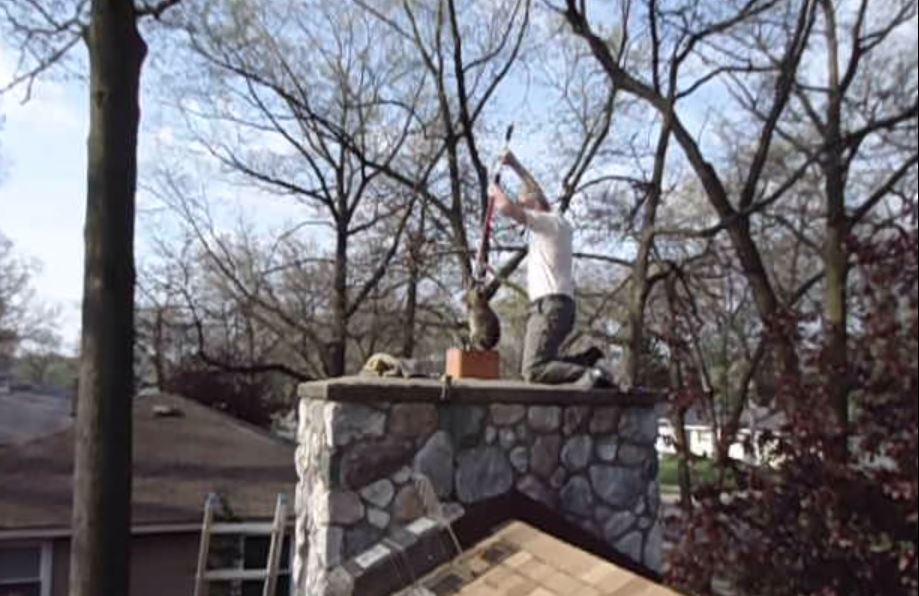 How To Remove A Wild Animal In The Chimney