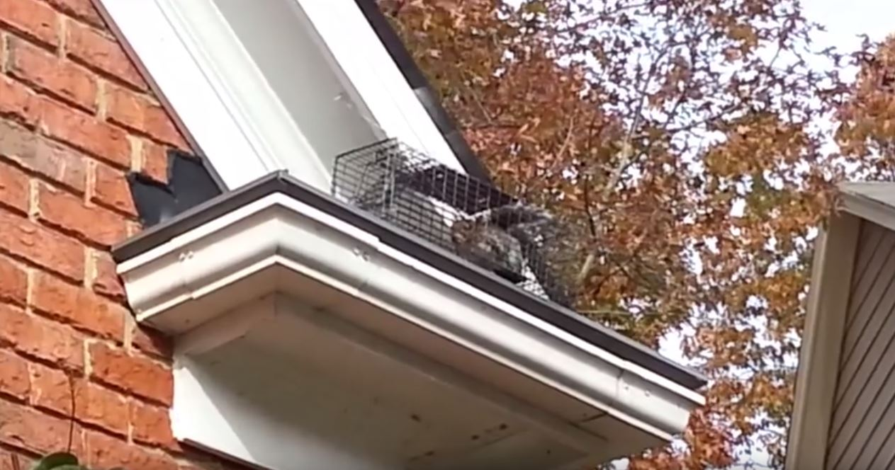 Animals In The Eaves