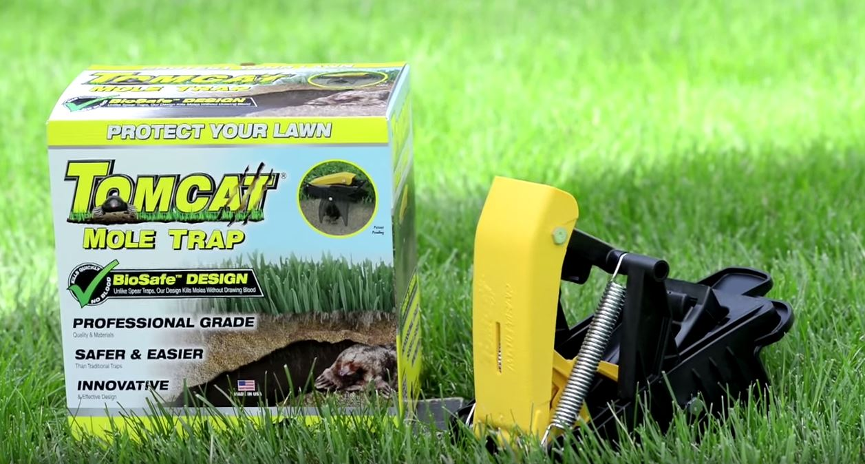 How To Get Rid Of Moles In Yard Without Killing Them